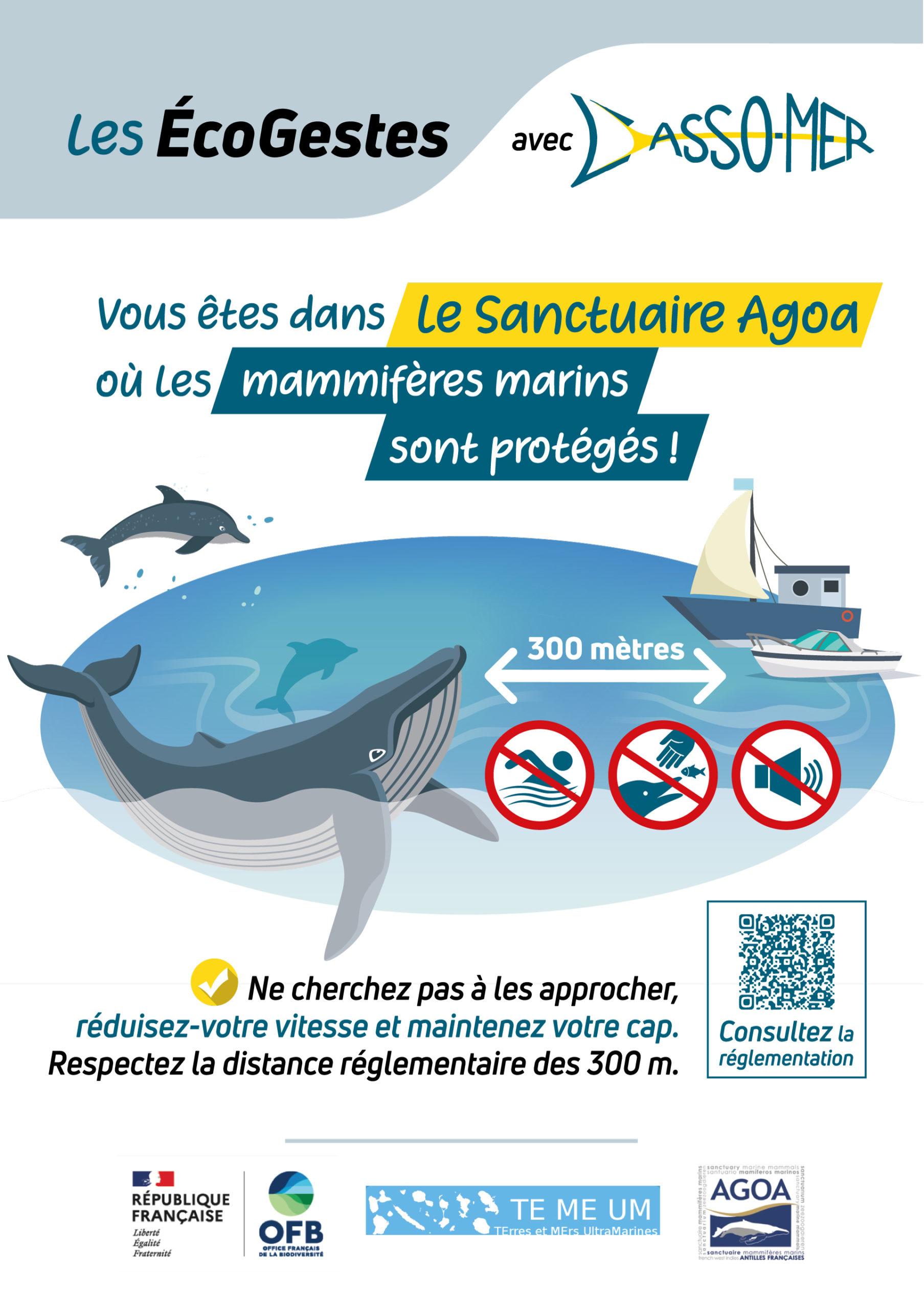ecogestes baleine